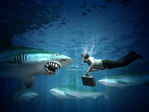 onderhandelblunders-tegen-haaien